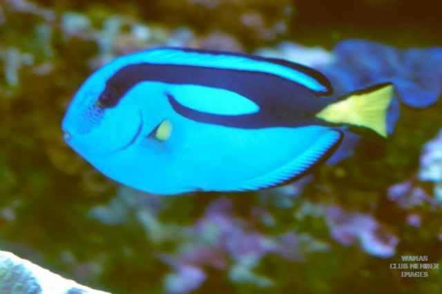 Purty Hippo Tang