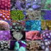 Softies Coral Frag Pack2